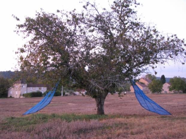 arbre ailé Shigeko HIRAKAWA à ALLES la nuit (1)
