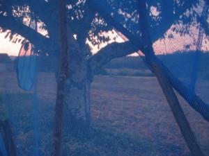 arbre ailé Shigeko HIRAKAWA à ALLES la  nuit  (2)