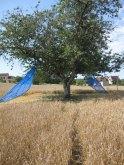 Shigeko HIRAKAWA  arbre ailé Alles EPHEMERES  2009  (1)