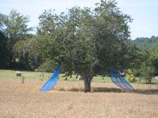 Shigeko HIRAKAWA arbre ailé Alles EPHEMERES 2009 (2)
