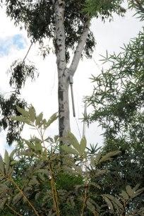 """Erik SAMAKH ; """"Les flûtes de Lontan ou les flûtes endormies"""" 2008 ; Conservatoire botanique National de Mascarin, Ile de la Réunion"""