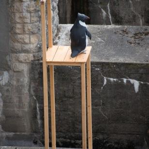 """""""Manchot d'Adélie"""", Victoria KLOTZ ; barrage de Tuilières ; Biennale EPHEMERES 2015"""