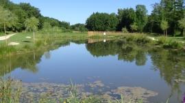 végétation autour de l'étang de Queyssac (1)