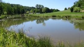 végétation autour de l'étang de Queyssac (2)