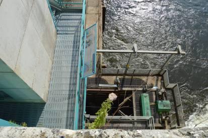 l'ascenseur à poissons