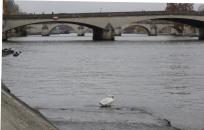 2017 en bateau bus sur la Seine (7)